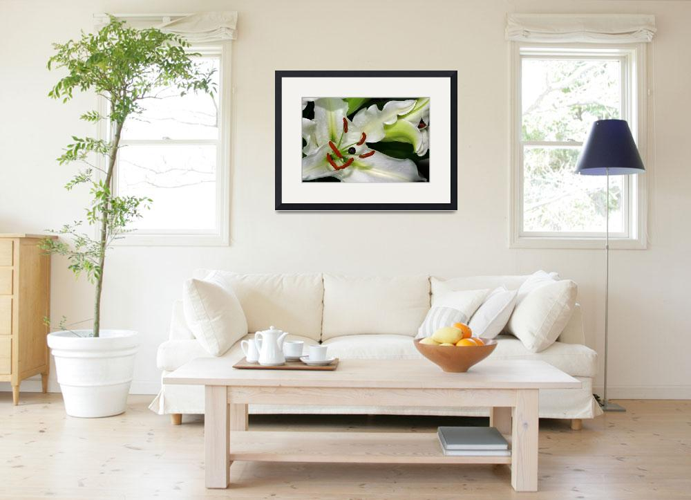 """""""White Lily&quot  by Photo-Writer"""