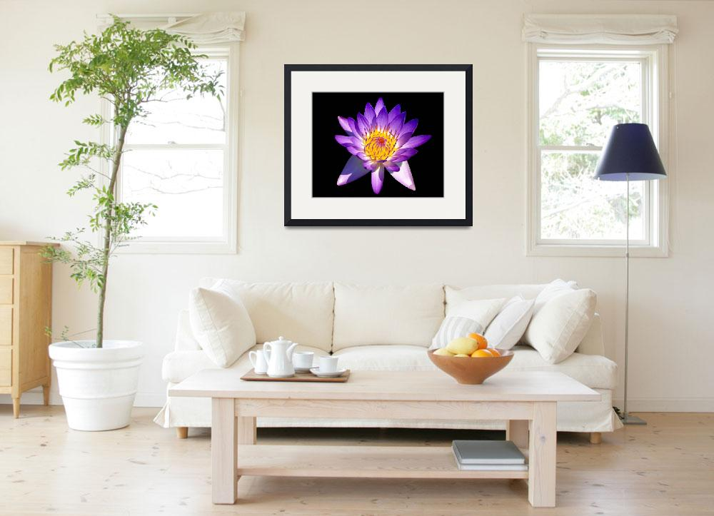 """""""Blooming Purple  Fragrant Water Lily&quot  (2008) by George_Oze"""