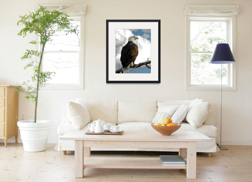 """Eagle in Profile #2&quot  by Callahan_Galleries"
