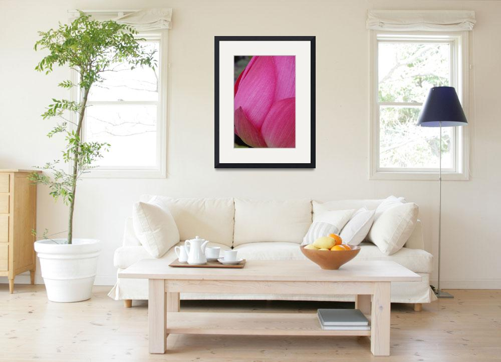"""""""pink lotus flower&quot  by nyc-naturephoto"""