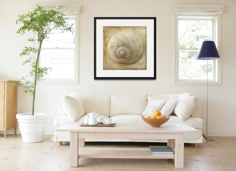 """White Sea Shell Still Life&quot  (2014) by judystalus"
