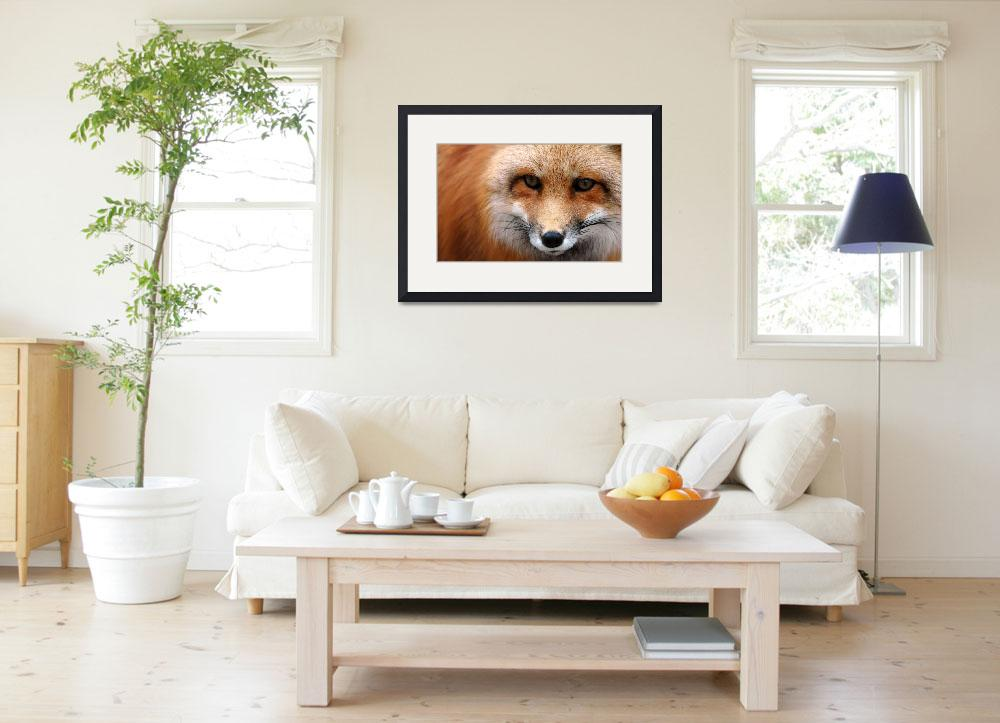 """""""Red Fox 2""""  (2008) by Donshots"""