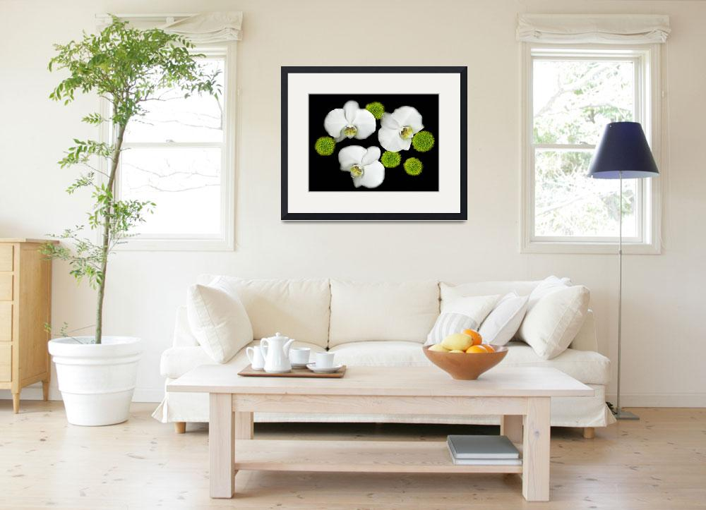 """""""white orchids original color photography&quot  (2015) by modernhouseart"""