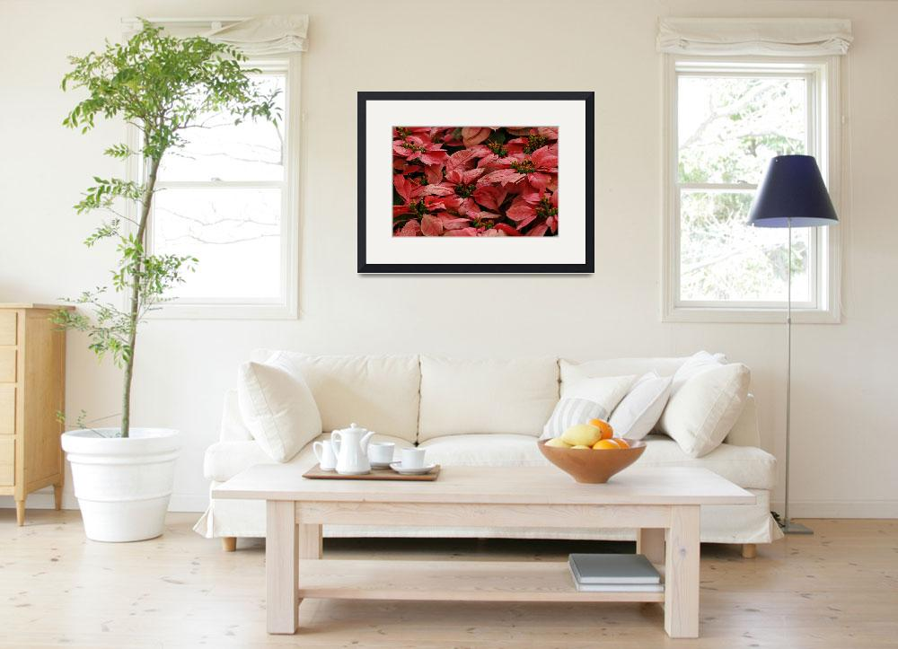 """""""Red bed 2""""  by sureshgundappa"""