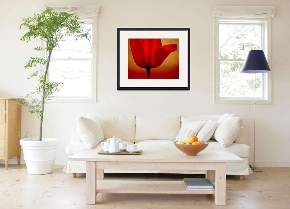 """""""Red Tulip&quot  (2014) by joanhan"""