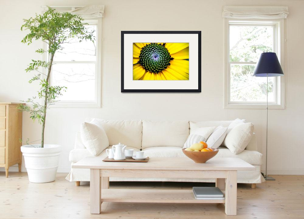 """""""YELLOW BLOSSOM OF THE GOLDSTURM BLACK EYED SUSAN&quot  (2010) by photographybyryankelly"""
