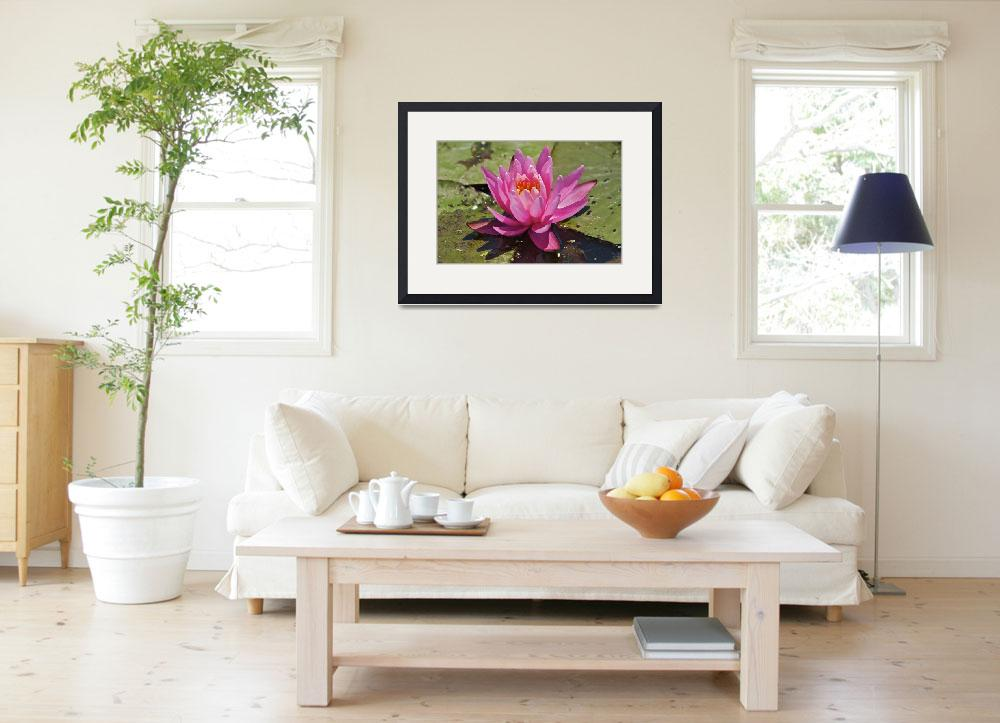 """""""Fragrant Water Lily (Nymphaea odorata) Pink Variet&quot  by Pipevinestudio"""