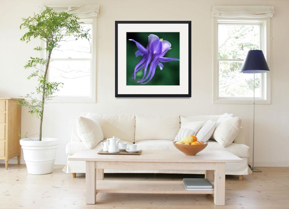 """""""Leaping Columbine, hb33 square, Heidi Brandt&quot  by GypsyChicksPhotography"""