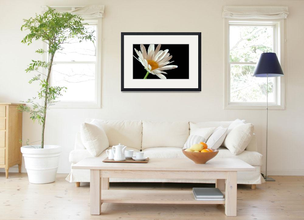 """""""Flower 02a White Spring Macro Daisy&quot  (2010) by Ricardos"""
