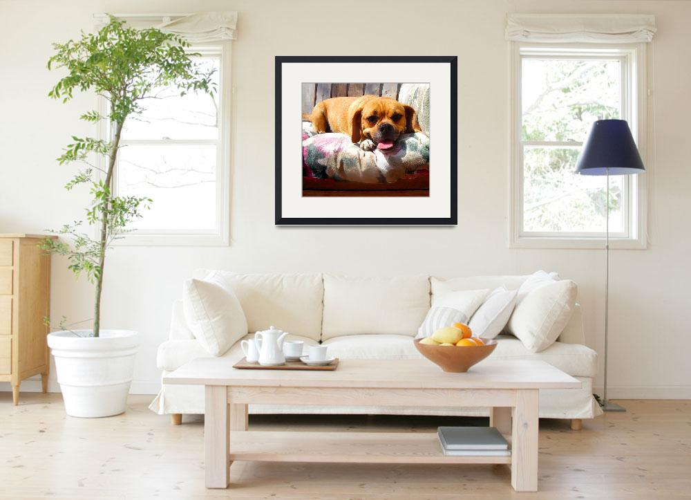 """""""Puggle Lounging&quot  (2009) by AmyVangsgard"""