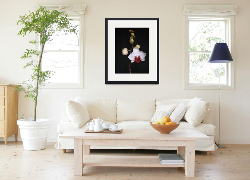 """""""White Orchid&quot  (2012) by feophotos"""