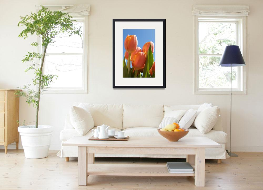 """""""peach tulips in sun""""  by soltrcy"""