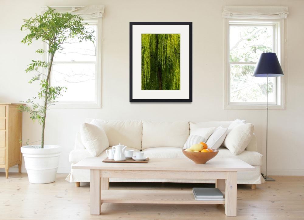 """""""Weeping Willow Tree Landscape Meditation Wall Art""""  (2011) by PhotographsByCarolFAustin"""