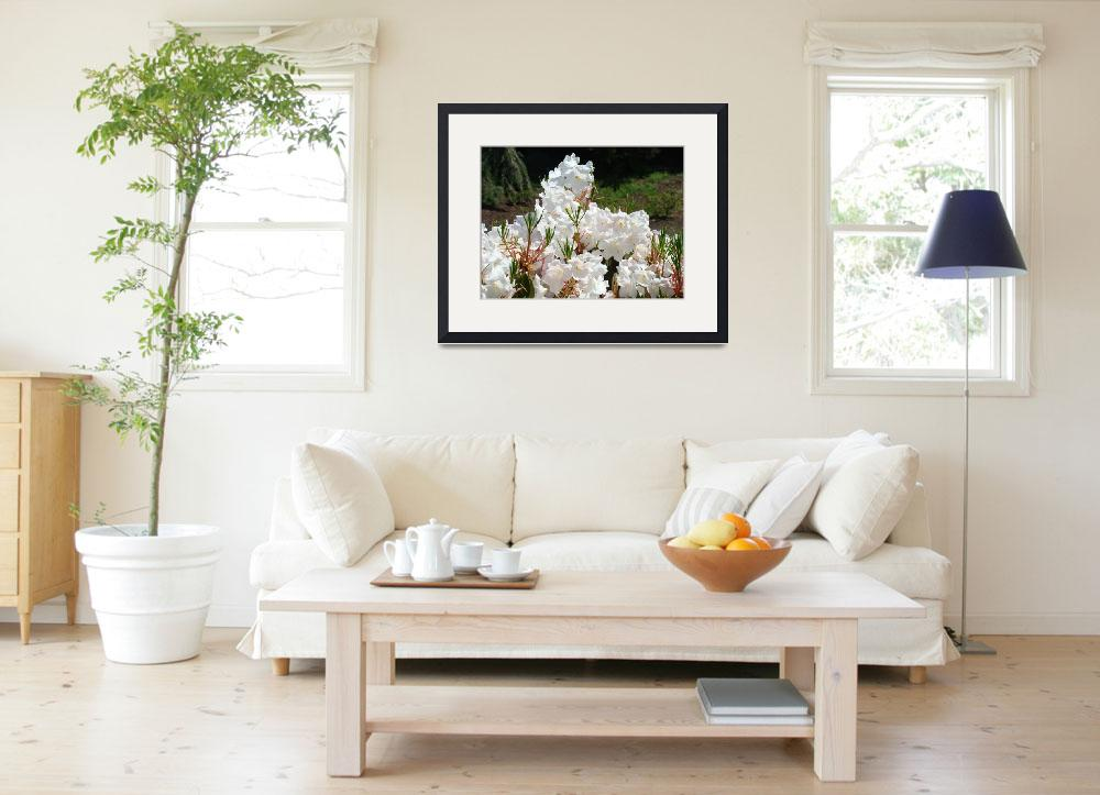 """""""Rhododendrons Sunlit White Rhodies Landscape""""  (2010) by BasleeTroutman"""