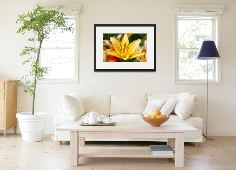 """""""Yellow Lily&quot  by PaulTruckel"""