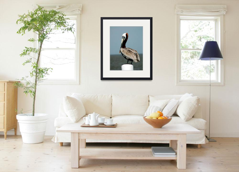 """""""Pelican Collection #2&quot  by Midniteagle"""