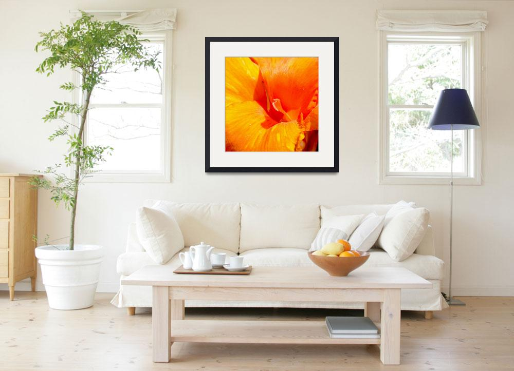 """Flower in Bright Orange&quot  (2010) by haydenjones"