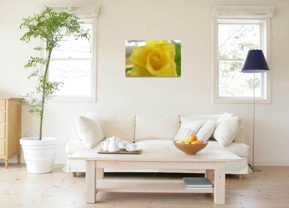 """""""YELLOW ROSE""""  (2011) by shaynaphotography"""