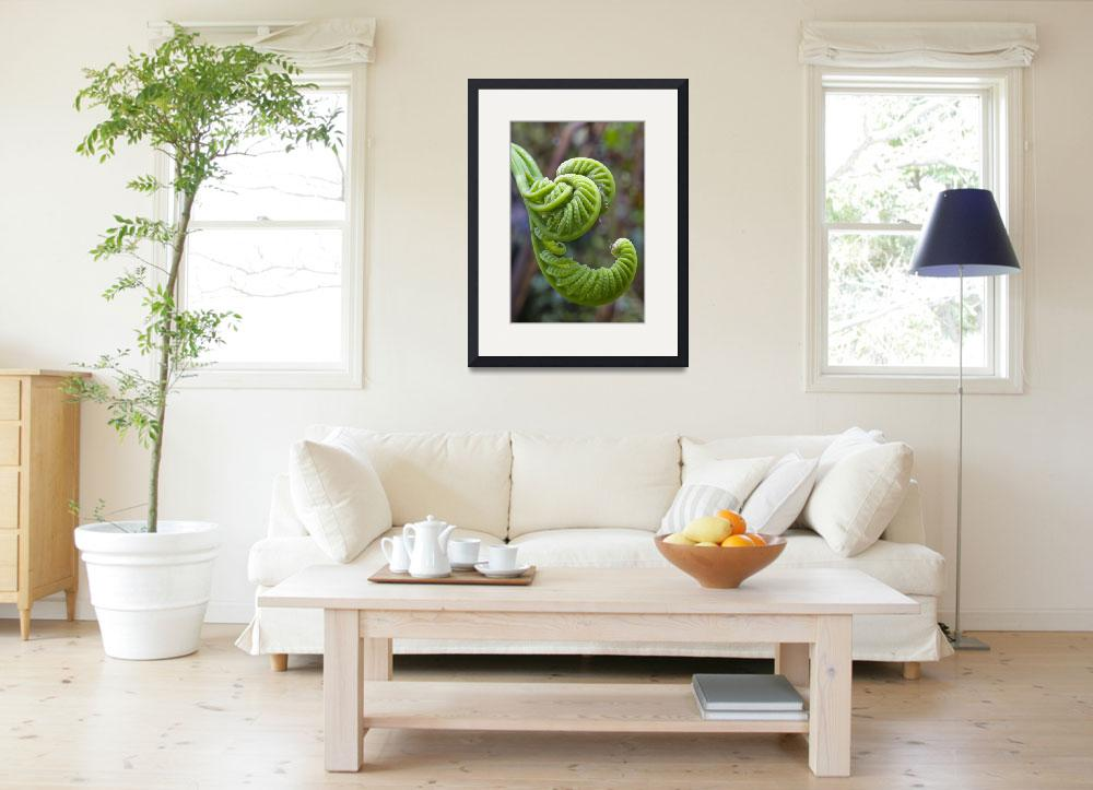 """""""Cloud Forest Fern""""  (2009) by SederquistPhotography"""