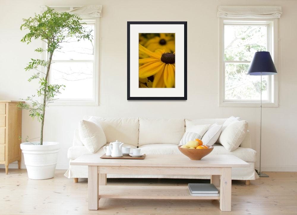 """Black-Eyed Susan - 2&quot  (2008) by TheNavigator"