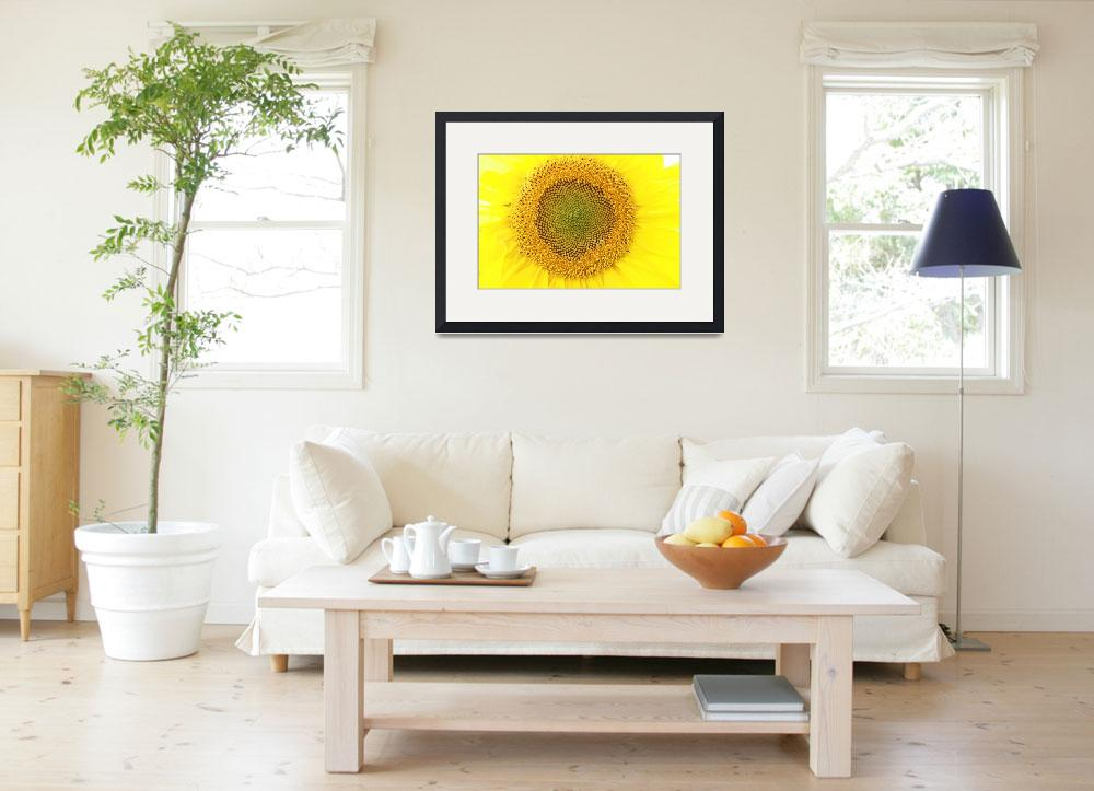 """Sunflower&quot  (2013) by rhamm"