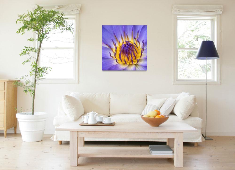 """The Lotus Flower""  (2011) by sharonmau"
