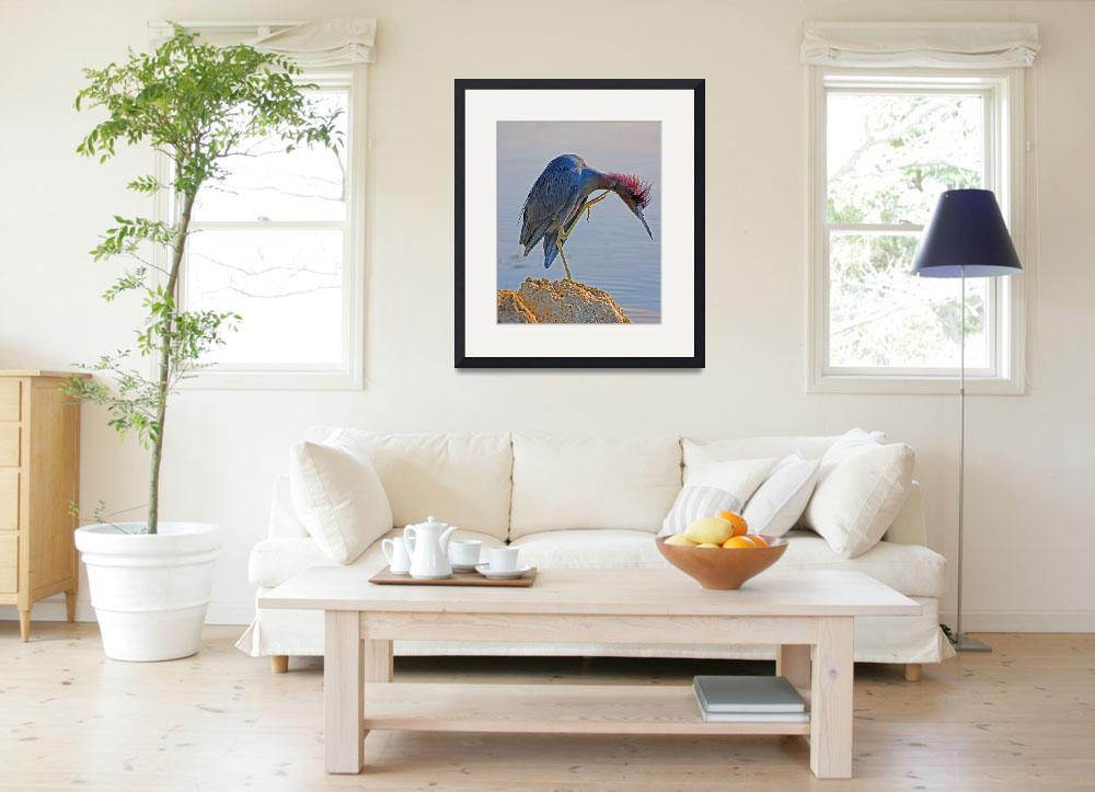 """""""Little Blue Heron with Itch&quot  (2010) by shelshots"""