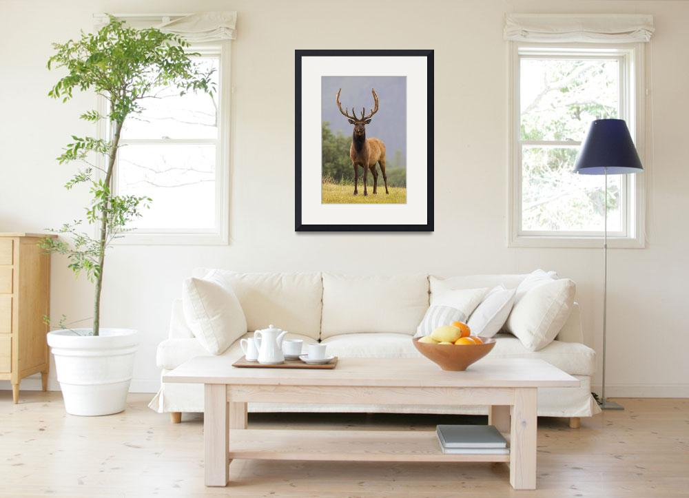 """""""Bull Roosevelt Elk With Antlers In Velvet Stands A&quot  by DesignPics"""