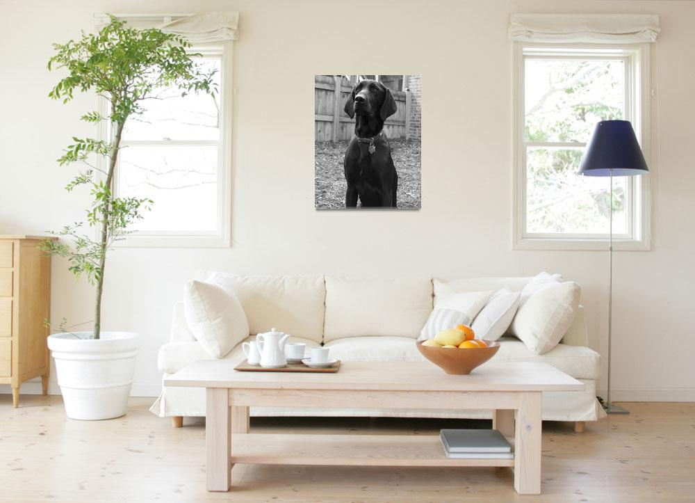 """""""Christopher 16x20""""  by PetPhotoChicago"""