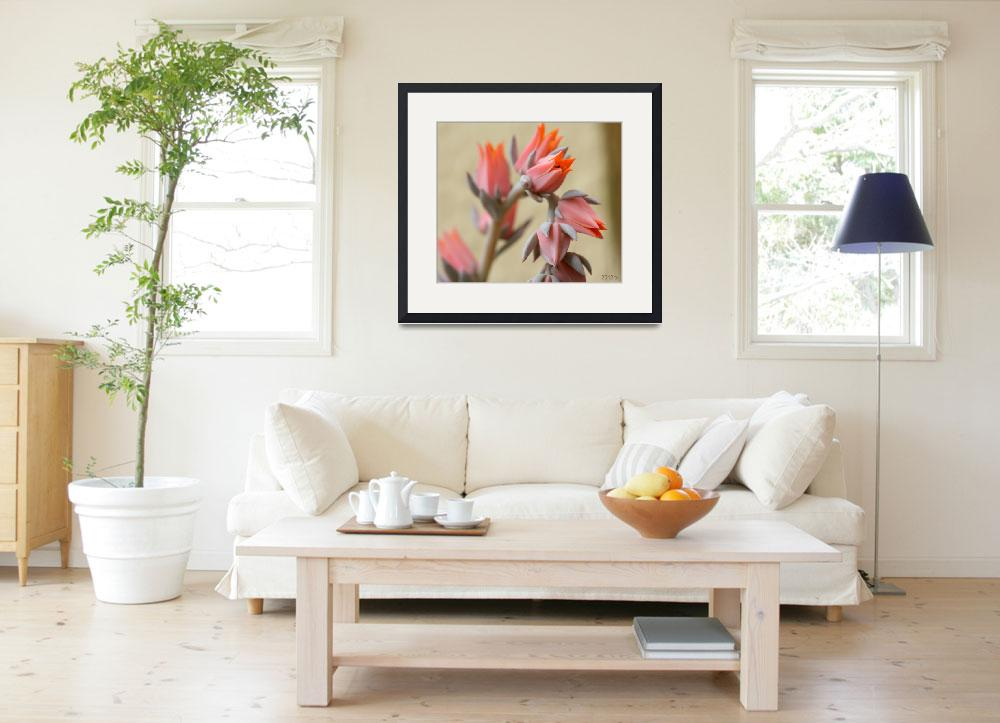 """""""Succulent Flowers""""  (2012) by lwunlimited"""