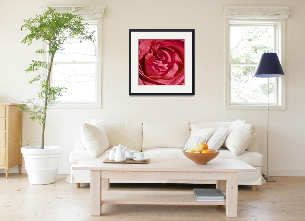 """""""Red Rose""""  (2014) by MichaelSass"""