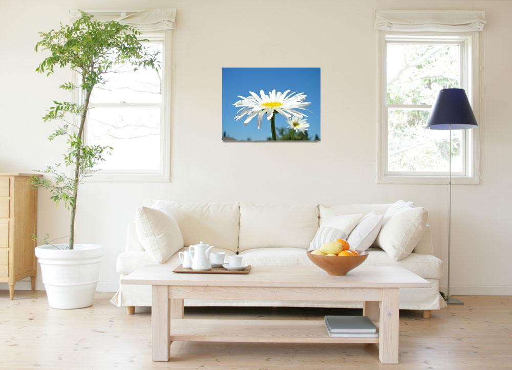 """""""White Daisy Floral art prints Summer Daisies""""  (2010) by BasleeTroutman"""
