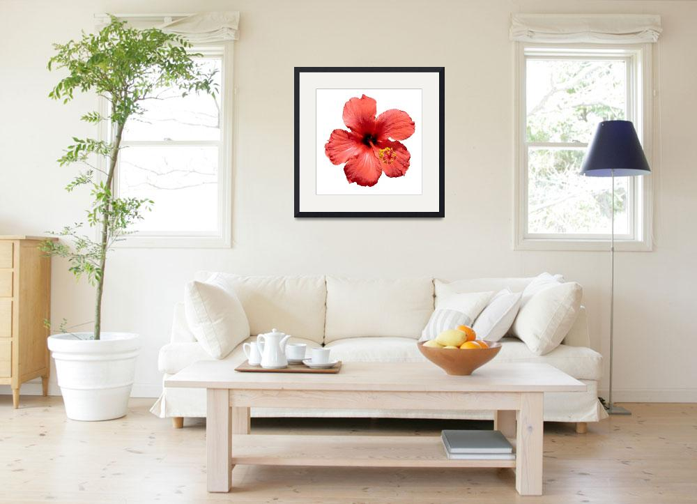 """""""Red Hibiscus flower&quot  (2009) by yio"""