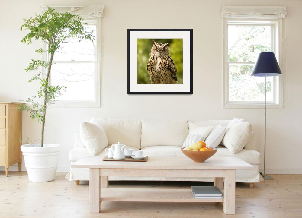 """""""Great horned owl&quot  (2008) by IanMiddletonphotography"""