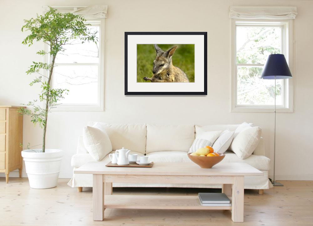 """""""WALLABY""""  (2012) by Tezza"""