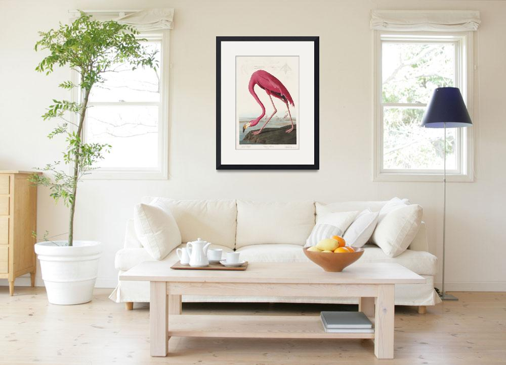 """Pink Flamingo from Birds of America&quot  by FineArtClassics"