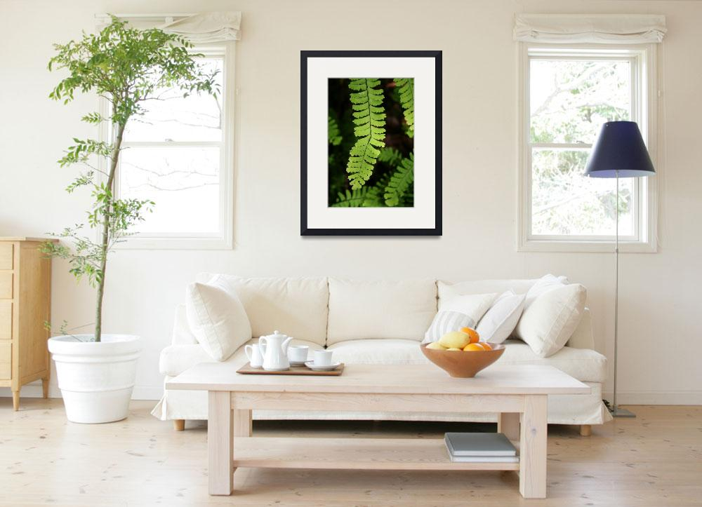 """maidenhair fern&quot  by CoosRiverDancing"