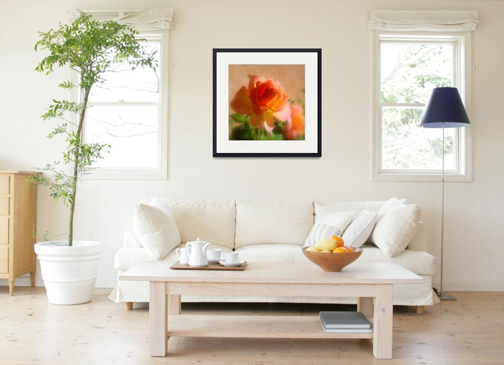 """""""Rose Against an Adobe Wall""""  (2008) by Philippa"""