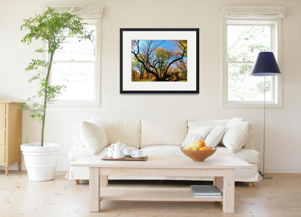 """""""Autumn trees&quot  (2011) by biriart"""