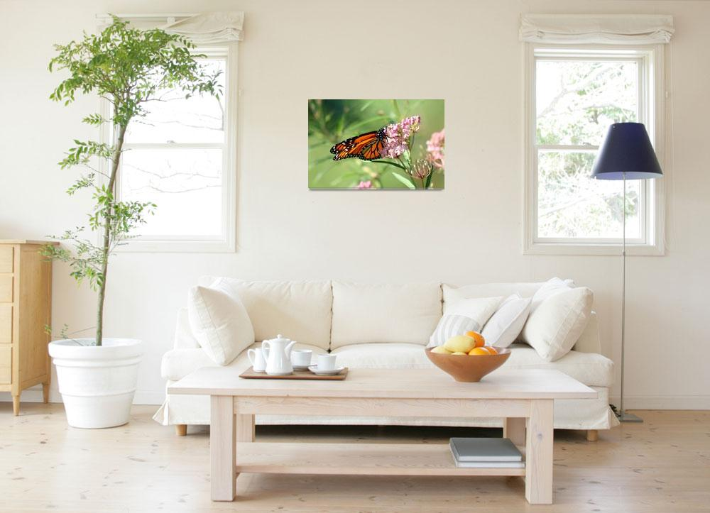 """Butterfly Monarch Lepidoptera&quot  (2012) by KsWorldArt"
