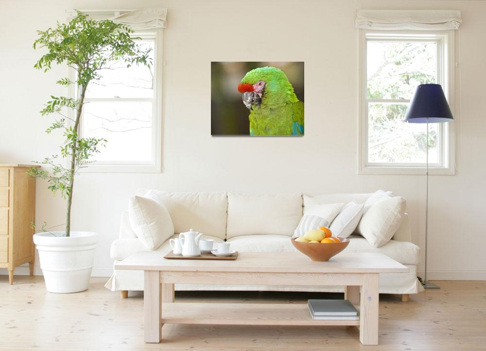 """Military Macaw (Ara militaris)""  (2009) by eyalna"