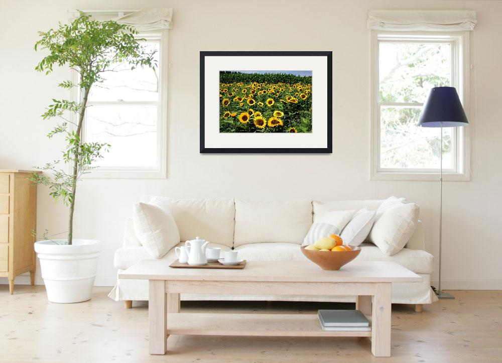 """""""sunflowers-5793&quot  by CaptureLife"""