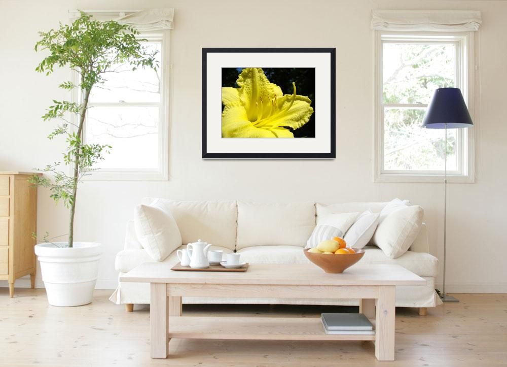 """""""Yellow Lily Flower art Fine Art Photography&quot  (2010) by BasleeTroutman"""