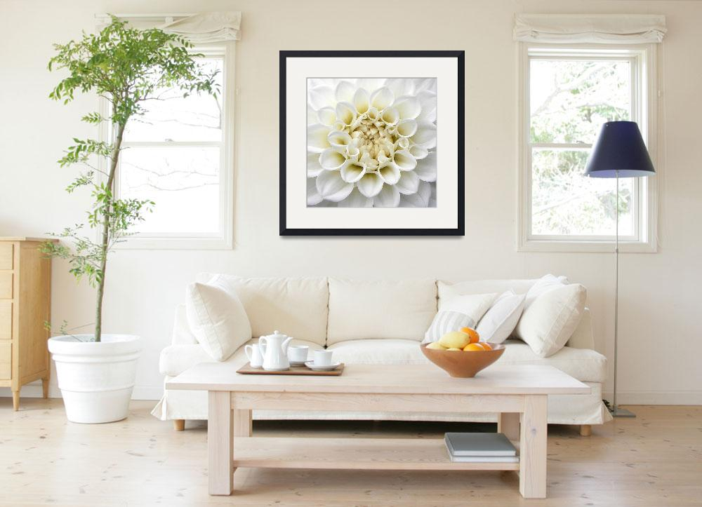 """""""White Dahlia&quot  (2008) by mikepdx"""