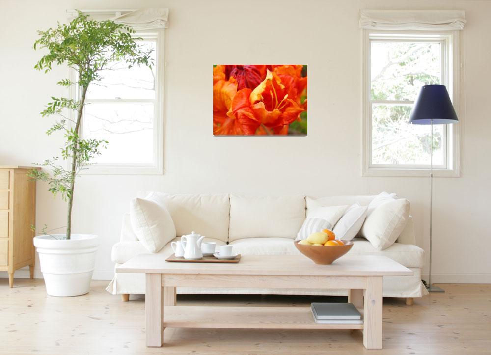 """""""Orange Rhodie Flower art print Rhododendron Macro""""  (2010) by BasleeTroutman"""