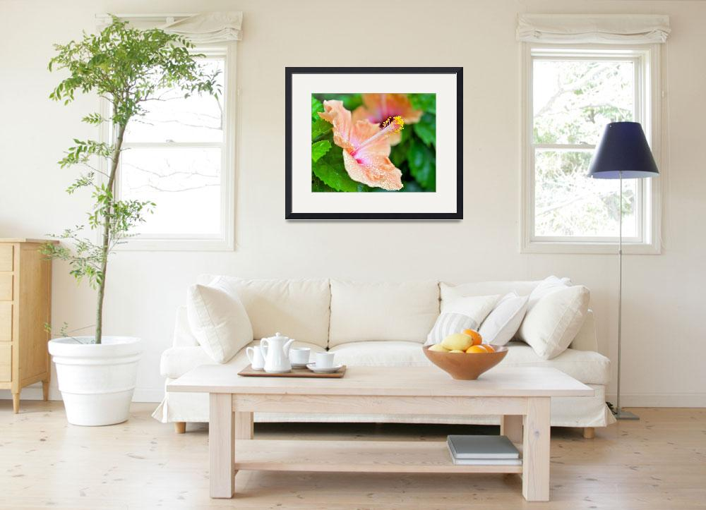 """""""Orange Hibiscus""""  (2010) by ImageArt-Photography"""