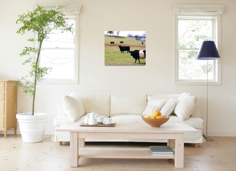 """Cows Graze""  (2011) by shsight"