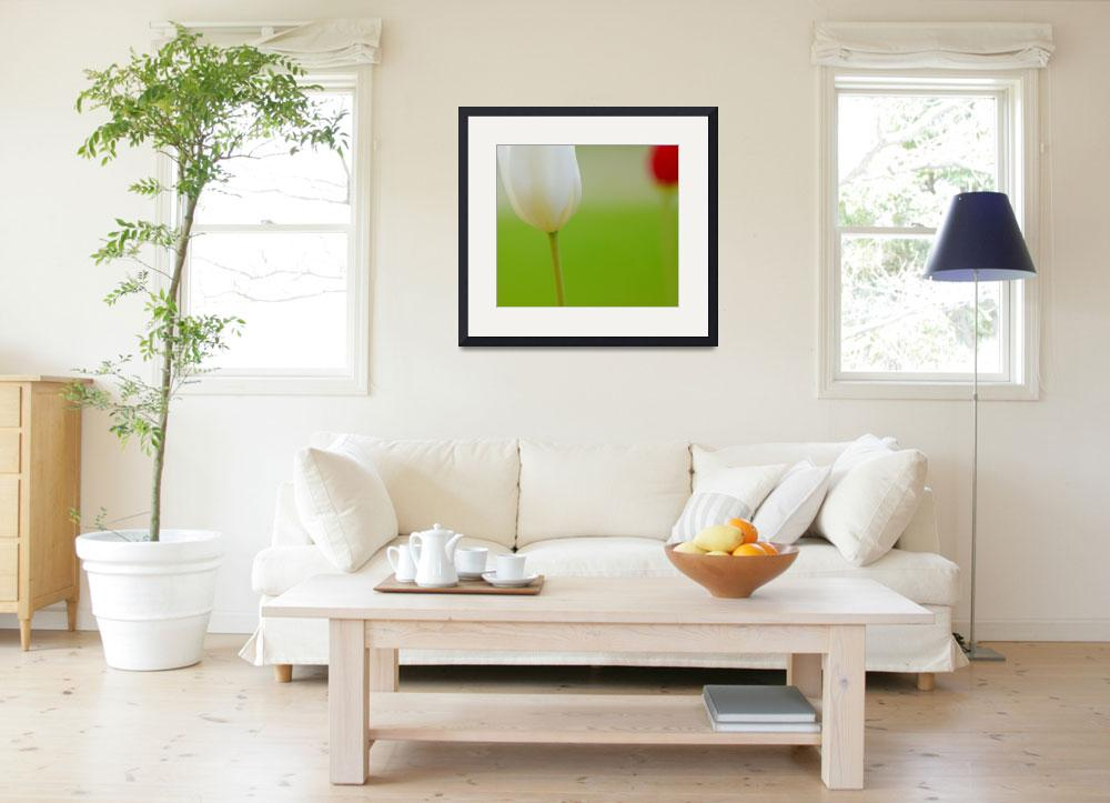 """""""White and Red Tulips""""  (2014) by joanhan"""