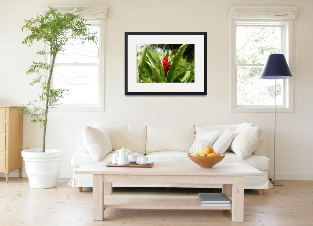 """""""Cayman Islands : Red Ginger Lily&quot  by RonScott"""