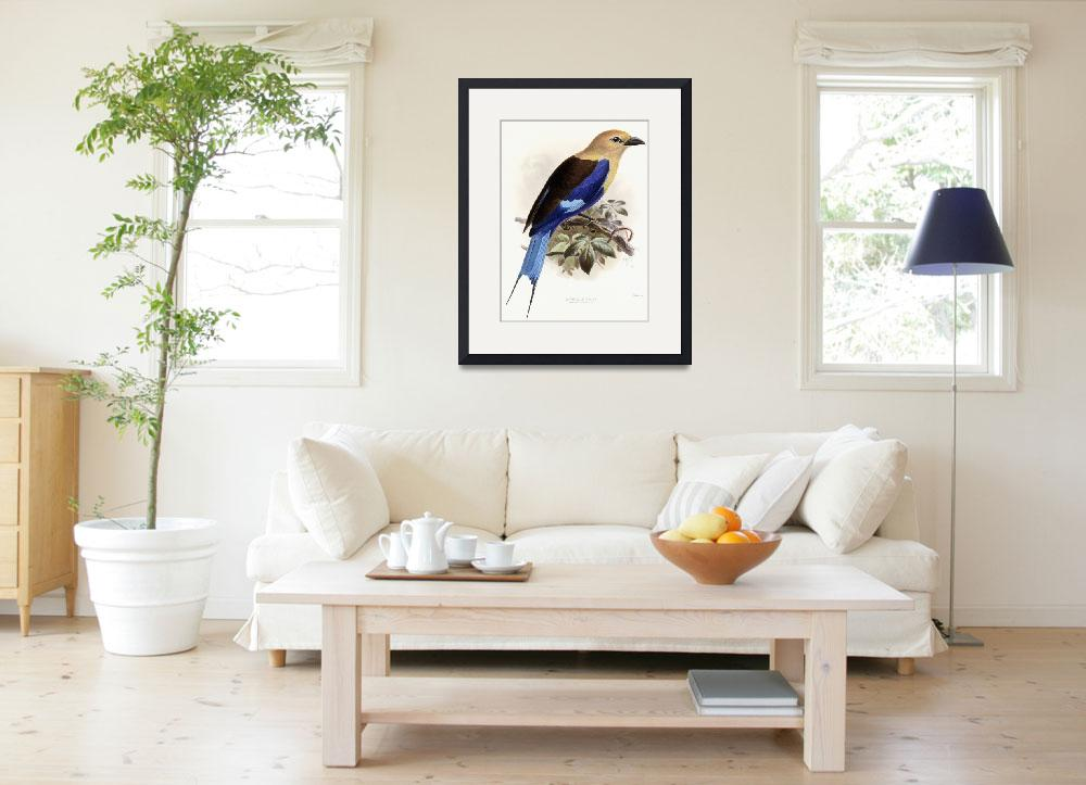 """""""Bluebellied Roller, 1893 (hand-coloured lithograph&quot  by fineartmasters"""